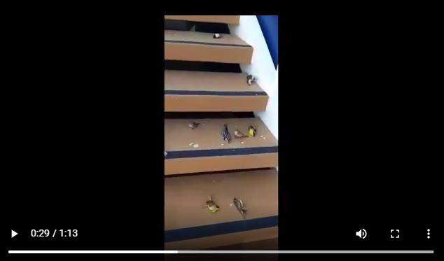 5G Cruise Ship kills hundreds of birds