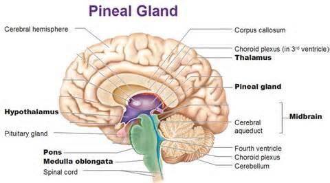 DARPA Hydrogel VS Human Pineal Gland