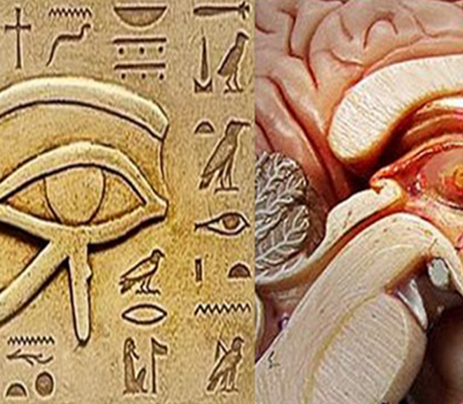 The Nasal Swabs are an attack on the Pineal Gland.